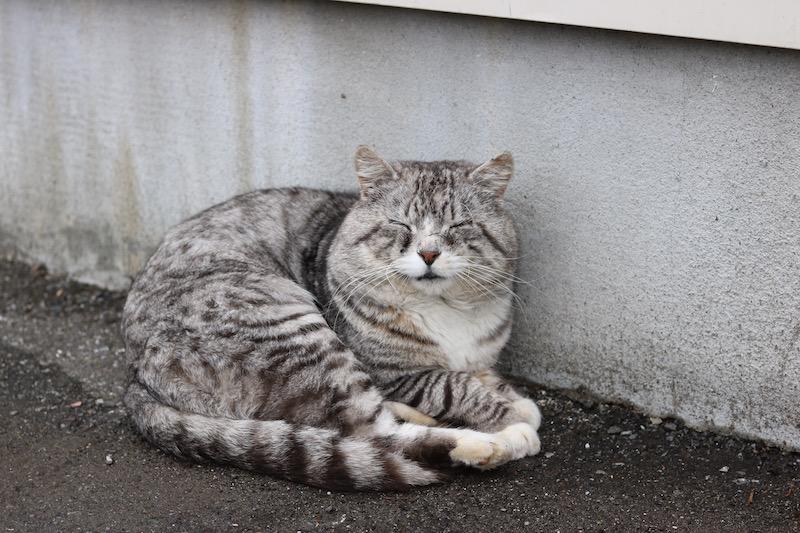 SLURPEE-CAT1