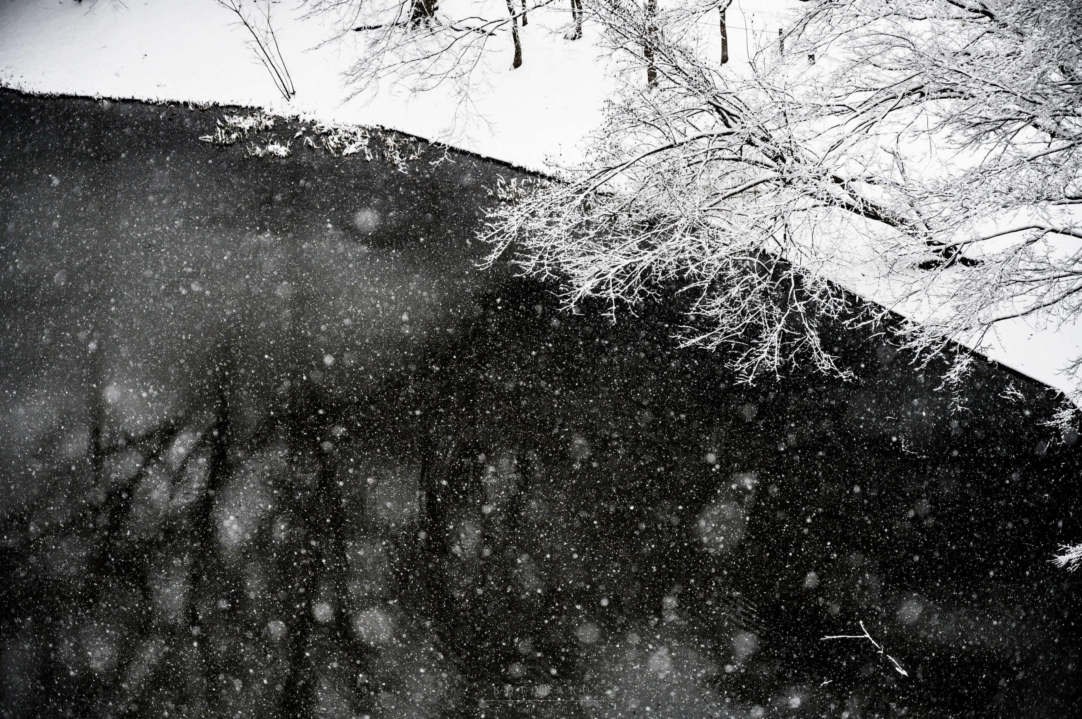 【千葉県の雪景色】一面の銀世界を堪能してきた
