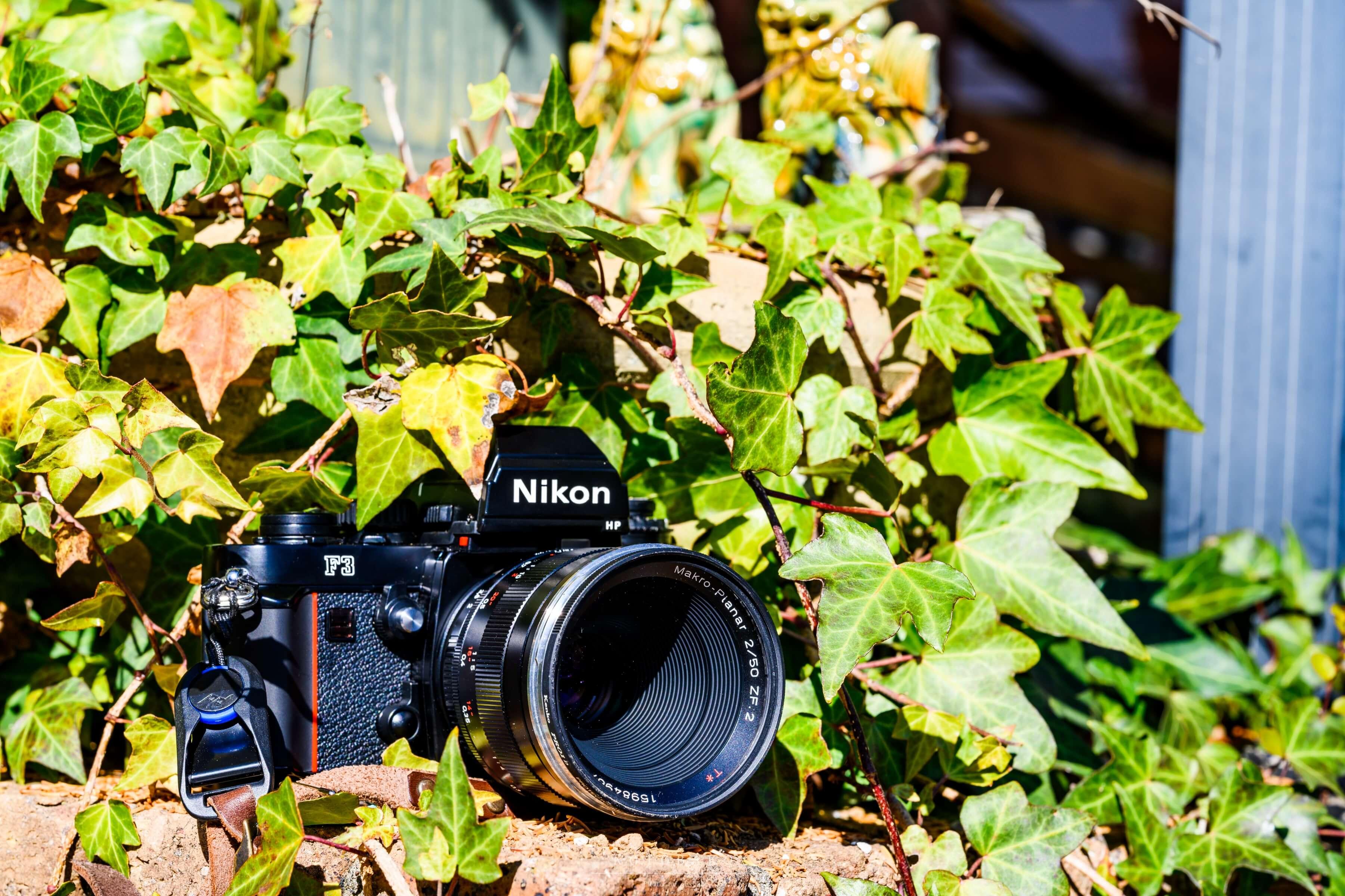 【作例写真】Nikon F3 レビュー!フィルム写真が楽しくなるFマウントフィルム一眼レフカメラ!!